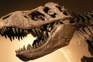 """Archibald: """"el impacto de un meteorito no fue la única causa de la extinción de los dinosaurios"""""""