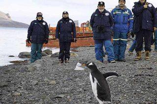 Fascinado por los pingüinos