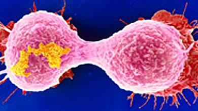 Clave química contra el cáncer