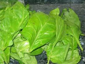 Las hortalizas verdes reducen el cáncer de pulmón