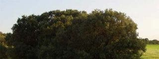 Subidos a los árboles para evitar su tala