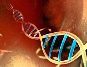 Secuencian el genoma del 'eslabón perdido' de los vertebrados