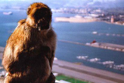 Inyección letal en Gibraltar