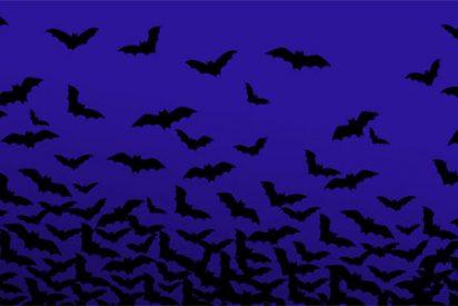Los murciélagos, perfectos centinelas