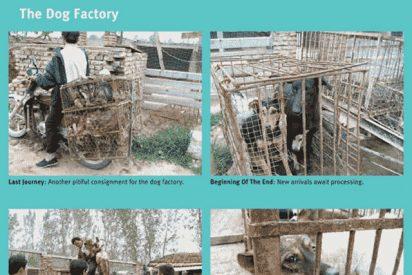 La brutal matanza de perros en China