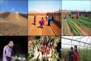 Denuncian a la Asociación de Agencias de Viajes de Las Palmas por apoyar viajes a zonas inestables del Sáhara