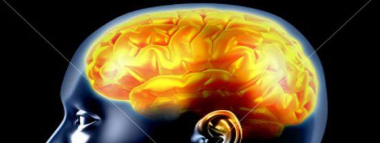 Tamaño del cerebro comenzaría a reducirse a partir de los 40 años