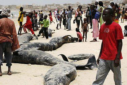 Ballenas varadas en la costa de Dakar