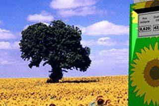 Abandonar los biocarburantes para luchar contra el hambre