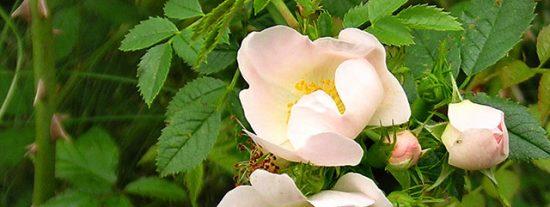 """El """"cortejo"""" de las flores"""