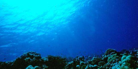 El calentamiento de los océanos genera desiertos submarinos