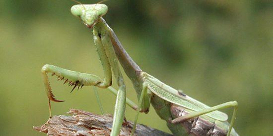 El Apocalipsis de los insectos