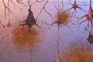El cerebro genera nuevas neuronas para controlar olores y movimiento