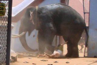 El elefante asesino, asesinado