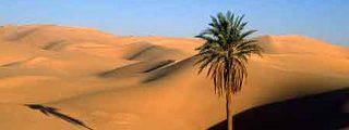 Hace 3000 años el Sahara era fértil