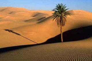 Sáhara: cuándo estuvo el enorme desierto repleto de peces