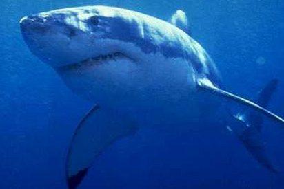 Pescan tiburones usando como cebo perros y gatos vivos