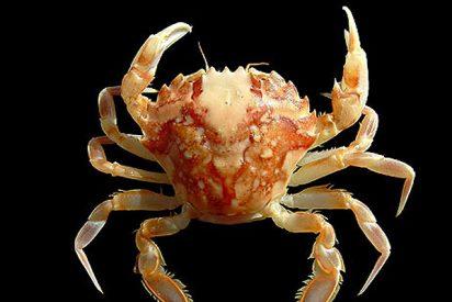 120.000 especies habitan en el mar