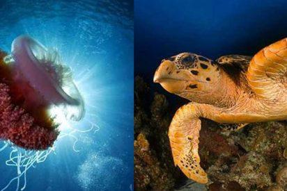 """Las """"celebrities"""" de los océanos"""