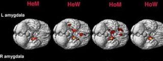 Los gays tienen un cerebro feminizado y las lesbianas varonil