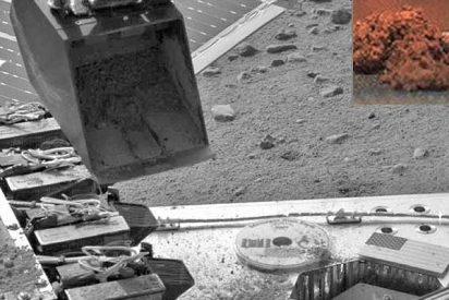 """NASA: """"Se podrían plantar espárragos en el suelo de Marte"""""""
