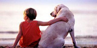 El 15 por ciento de los menores de 15 años tiene alergia a las mascotas