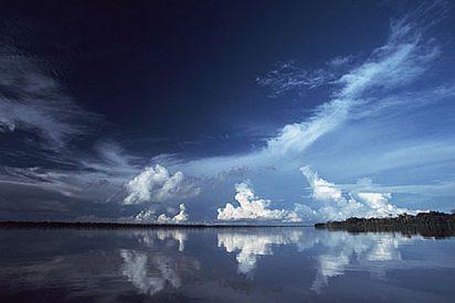 El cambio climático provoco la aparición de nuevas especies en la Amazonia