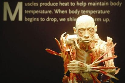 """""""Bodies... The Exhibition"""" prorrogada"""