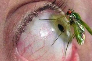 ¿Sabías que el 90 % de los insectos voladores portan peligrosas bacterias en los hospitales?