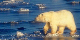 ¿Sobrevivirá el medio ambiente a los ecologistas?