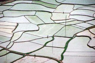 El reto de garantizar la alimentación para las generaciones presentes y futuras