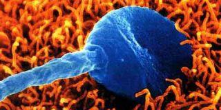 Un biochip identifica los espermatozoides más fértiles