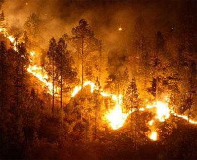 Sólo uno de cada mil responsables de incendios forestales llega a los tribunales