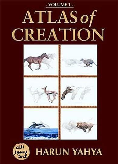 Recompensa al que le enseñe un fósil que demuestre la evolución