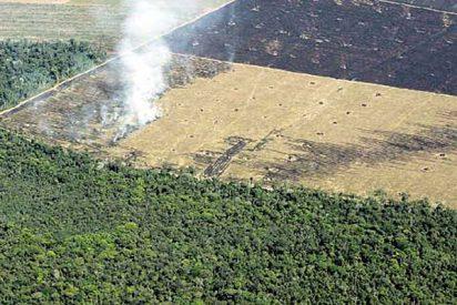 Brasil promete sin mucha convicción luchar contra la deforestación