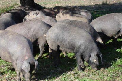 Cerdo Ibérico: Placer... y Salud