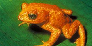 El 25% de los reptiles y anfibios europeos se encuentra en peligro de extinción