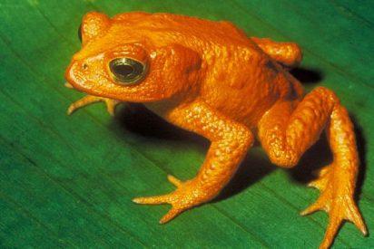 Los anfibios más raros del planeta
