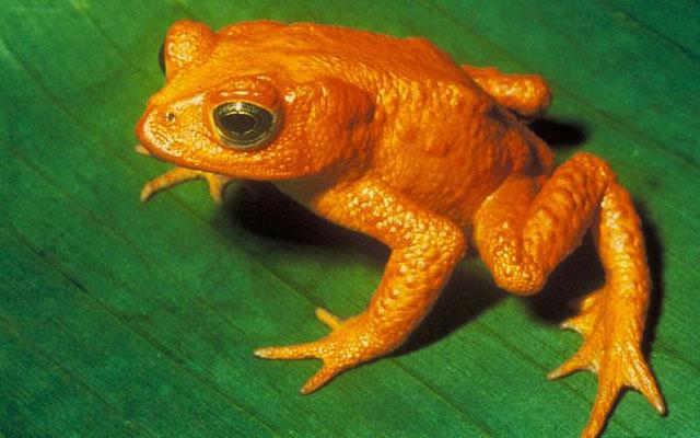 El 25% de los reptiles y anfibios europeos se encuentra en peligro de ...