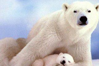 Atraviesan el Ártico sin usar rompehielos