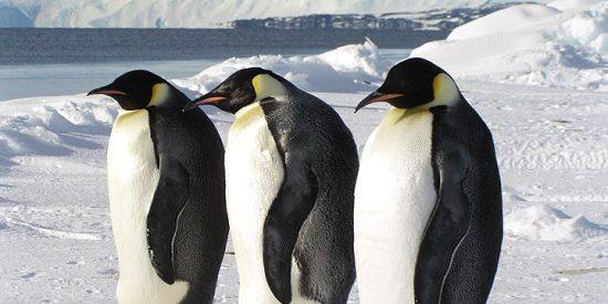 Hay 124 lagos bajo los hielos antárticos
