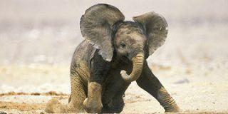 Los elefantes africanos guardan luto y se aislan tras la muerte de un miembro de su familia