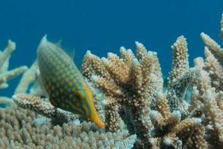 La gran barrera de coral australiana crece al ritmo más bajo de los últimos 400 años