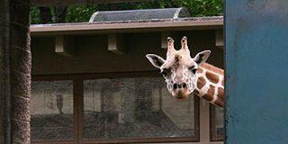 Animales del Zoo: Los próximos despedidos por la crisis