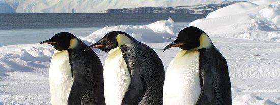 El deshielo afecta a zonas de la Antártida hasta ahora a salvo