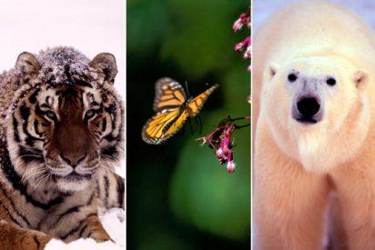 El tigre es la especie más amenazada de 2010