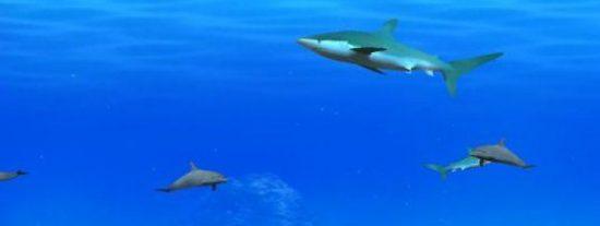 Los océanos serán un lugar más difícil para vivir a causa del ruido