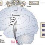 Científicos logran transformar los pensamientos en sonidos