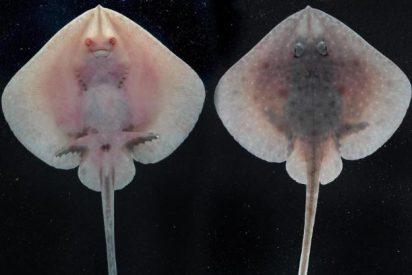 El cambio climático pone al descubierto extrañas criaturas marinas