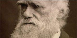 Darwin en la red